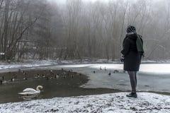 Χειμώνας 3 τροφών πουλιών παπιών κύκνων λιμνών σίτισης γυναικών Στοκ εικόνες με δικαίωμα ελεύθερης χρήσης