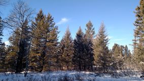 Χειμώνας υπαίθρια στη ζωή μου Στοκ εικόνα με δικαίωμα ελεύθερης χρήσης