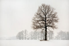 χειμώνας φορεμάτων Στοκ φωτογραφίες με δικαίωμα ελεύθερης χρήσης