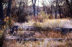 Χειμώνας φυσικός του δασικού πατώματος στο κρατικό πάρκο Pueblo λιμνών, Κολοράντο Στοκ Εικόνα