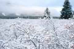 χειμώνας χιονιού τοπίων Στοκ φωτογραφίες με δικαίωμα ελεύθερης χρήσης