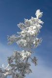 χειμώνας χιονιού 2 κλάδων Στοκ εικόνες με δικαίωμα ελεύθερης χρήσης