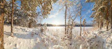 Χειμώνας, χιονισμένο δάσος μια ηλιόλουστη ημέρα 33c ural χειμώνας θερμοκρασίας της Ρωσίας τοπίων Ιανουαρίου Στοκ Φωτογραφία