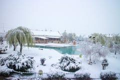 Χειμώνας, χιόνι, παγωμένη δέντρα λίμνη στοκ εικόνες