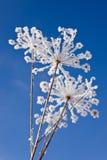 χειμώνας χλόης Στοκ Φωτογραφίες