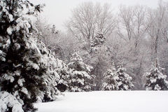χειμώνας χρονικών δέντρων π&eps Στοκ φωτογραφίες με δικαίωμα ελεύθερης χρήσης