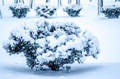 Χειμώνας! Χρόνος διασκέδασης! Χρόνος χιονιού! Στοκ φωτογραφίες με δικαίωμα ελεύθερης χρήσης