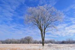 Χειμώνας, ψηλό λιβάδι χλόης Στοκ Φωτογραφία