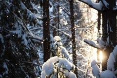 χειμώνας όψης της Ουκρανίας ήλιων βουνών moloda Στοκ Φωτογραφίες