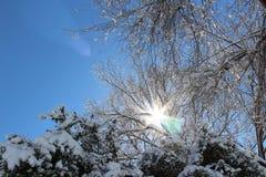 χειμώνας όψης της Ουκρανίας ήλιων βουνών moloda Στοκ Εικόνες