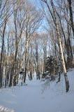 Χειμώνας στοκ εικόνες