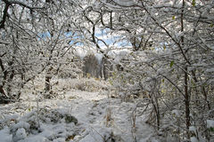 χειμώνας Στοκ Εικόνα