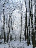 χειμώνας 2 τοπίων Στοκ Φωτογραφίες