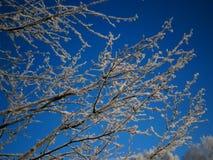 Χειμώνας-002 Στοκ φωτογραφίες με δικαίωμα ελεύθερης χρήσης