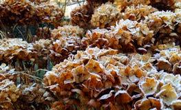 Χειμώνας Στοκ φωτογραφία με δικαίωμα ελεύθερης χρήσης