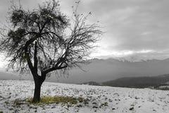 Χειμώνας Στοκ φωτογραφίες με δικαίωμα ελεύθερης χρήσης