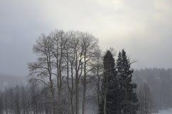 Χειμώνας Arrowhead Κολοράντο Στοκ φωτογραφίες με δικαίωμα ελεύθερης χρήσης