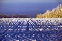 Χειμώνας field Στοκ φωτογραφία με δικαίωμα ελεύθερης χρήσης