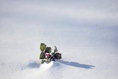 Χειμώνας Holly Στοκ Εικόνες