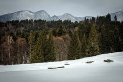 Χειμώνας landcape των βουνών Bucegi στοκ εικόνα