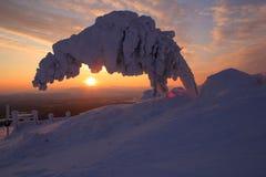 Χειμώνας pyhä-Luosto στο εθνικό πάρκο Lapland Στοκ Εικόνα