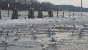 Χειμώνας riverfront Στοκ εικόνα με δικαίωμα ελεύθερης χρήσης