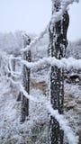 Χειμώνας Sabanta Στοκ Φωτογραφίες