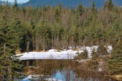 Χειμώνας Snowscape στην Αλάσκα Στοκ Εικόνες