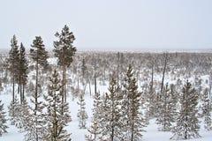 χειμώνας taiga Στοκ φωτογραφίες με δικαίωμα ελεύθερης χρήσης