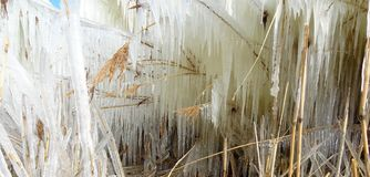 Χειμώνας Wolderwijd παγακιών στοκ φωτογραφία