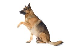 χειραψία σκυλιών Στοκ εικόνες με δικαίωμα ελεύθερης χρήσης