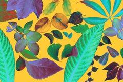 χειρισμένα φύλλα πέταλα λ&omi Στοκ φωτογραφίες με δικαίωμα ελεύθερης χρήσης
