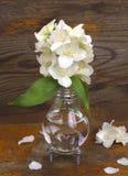 Χειροποίητο βάζο λαμπών φωτός με jasmine τα λουλούδια στο υπόβαθρο Στοκ Εικόνες