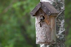 Χειροποίητο birdhouse και ένα μικρό πουλί Στοκ φωτογραφίες με δικαίωμα ελεύθερης χρήσης