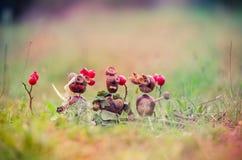Χειροτεχνία κάστανων φθινοπώρου Στοκ εικόνα με δικαίωμα ελεύθερης χρήσης