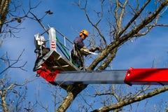Χειρούργος δέντρων Στοκ Εικόνες