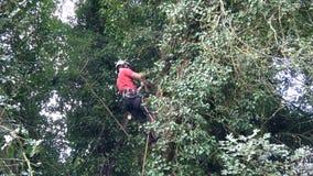 Χειρούργος δέντρων στην εργασία σε ένα ψηλό δέντρο απόθεμα βίντεο