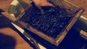 Χειρωνακτικός μηχανισμός για τα σταφύλια Συντρίψτε τα σταφύλια στο χυμό και το κρασί απόθεμα βίντεο