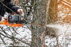 Χειρωνακτικό αλυσιδοπρίονο Τα χέρια ατόμων, πριονίζουν ένα δέντρο στα ξύλα το χειμώνα α Στοκ εικόνες με δικαίωμα ελεύθερης χρήσης