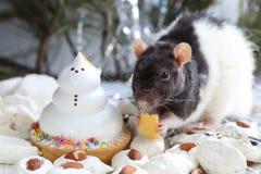 Χειρωνακτικό ποντίκι που τρώει το τυρί στον πίνακα διακοπών Στοκ Εικόνες