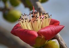 Χειλικό λουλούδι Στοκ Φωτογραφία