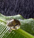 χελώνα βροχής Στοκ εικόνες με δικαίωμα ελεύθερης χρήσης