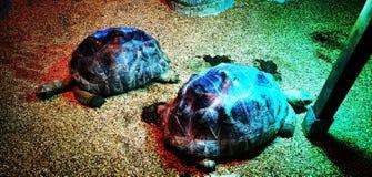 Χελώνα στοκ εικόνες