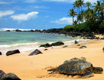 χελώνα θάλασσας στήριξης Στοκ φωτογραφία με δικαίωμα ελεύθερης χρήσης