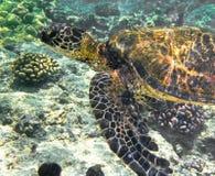 χελώνα θάλασσας υποβρύχ&io στοκ φωτογραφία με δικαίωμα ελεύθερης χρήσης
