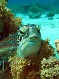 χελώνα θάλασσας στοκ φωτογραφία με δικαίωμα ελεύθερης χρήσης