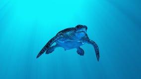 χελώνα θάλασσας Ελεύθερη απεικόνιση δικαιώματος