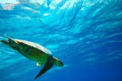 χελώνα θάλασσας στοκ εικόνες