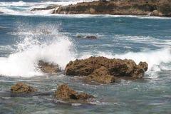 χελώνα λιμανιών Στοκ φωτογραφία με δικαίωμα ελεύθερης χρήσης