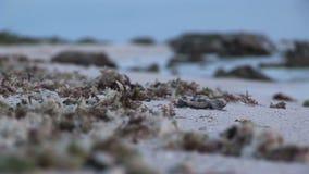Χελώνα μωρών φιλμ μικρού μήκους